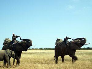 Safari Elephant Rides